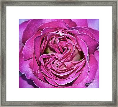 A Rose Is A Rose ... Framed Print by Gwyn Newcombe