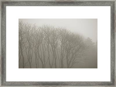 A Row Of Bare Trees In Fog Framed Print by Sindre Ellingsen
