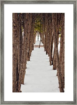 A Row Of Trees Outside In The Snow During Winter. Framed Print by Adam Hester
