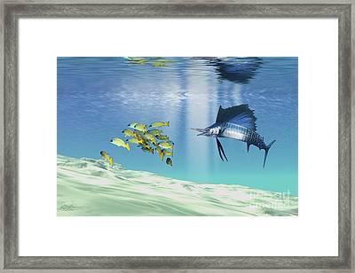 A Sailfish Hunts Prey On A Sandy Reef Framed Print by Corey Ford