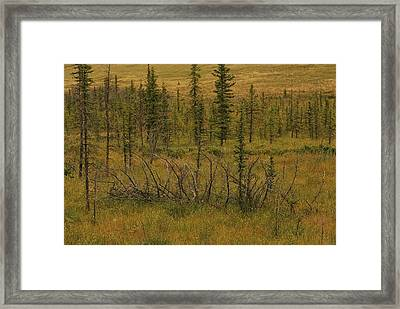 A Scenic View Of A Spruce Bog Framed Print by Raymond Gehman