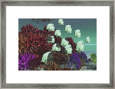A School Of Butterflyfish Swim Framed Print
