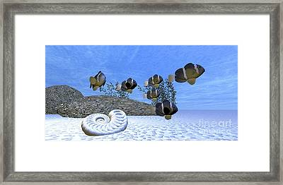 A School Of Clownfish Swim Framed Print