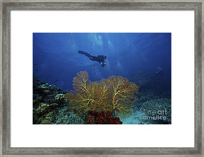 A Scuba Diver Swims Past A Large Yellow Framed Print by Terry Moore