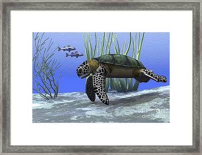 A Sea Turtle Makes Its Way Framed Print