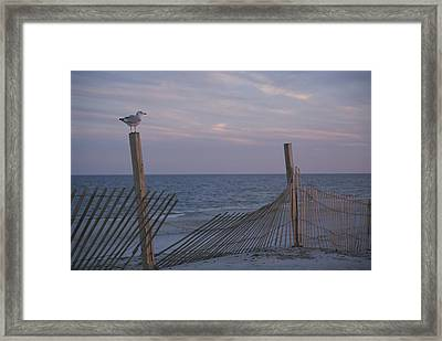 A Seagull Pauses Framed Print by Stacy Gold