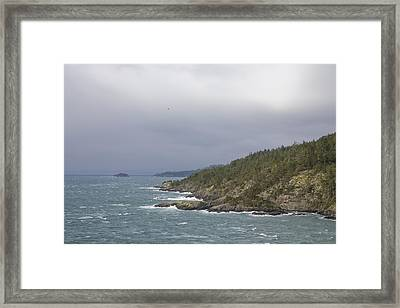 A Seagull Rides The Wind Framed Print