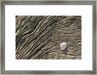 A Seashell Lies On A Deeply Grooved Framed Print