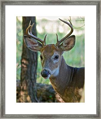 A Seven Point Profile 9752 Framed Print by Michael Peychich