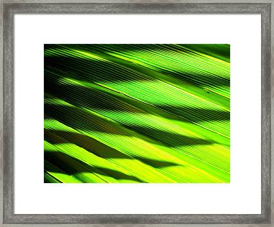 A Shadow Of A Palmfrond On A Palmfrond Framed Print by Catherine Natalia  Roche