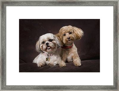 A Shihtzu And A Poodle On A Brown Framed Print by Corey Hochachka