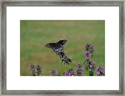 a Shot in time  Framed Print