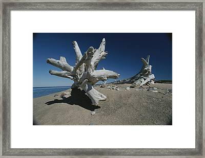 A Shot Of Some Driftwood On A Beach Framed Print by Raymond Gehman