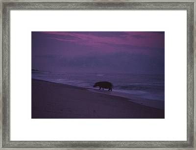 A Silhouetted Hippopotamus At Surfs Framed Print by Michael Nichols