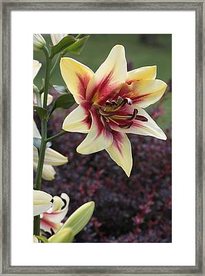 A Single Bloom Framed Print by Mike Lytle