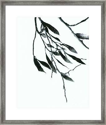 A Single Branch Framed Print by Ann Powell