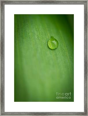 A Single Drop Framed Print