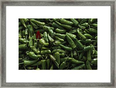 A Single Red Pepper Surrounded By Green Framed Print by James L. Stanfield