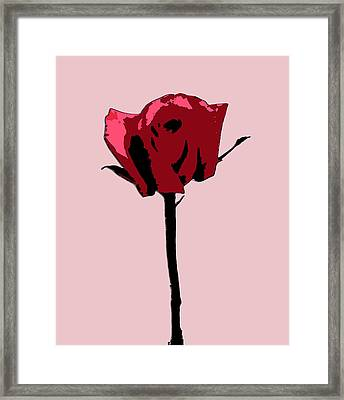 A Single Rose Framed Print by Karen Nicholson