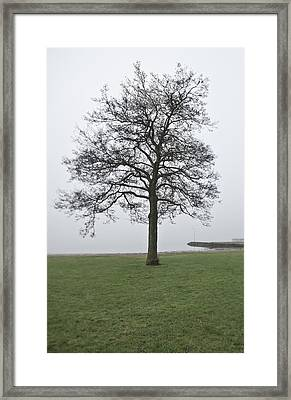 A Single Tree At The Sea Framed Print by Sindre Ellingsen