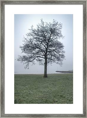 A Single Tree By The Sea On A Cold, Misty Morning Framed Print by Sindre Ellingsen