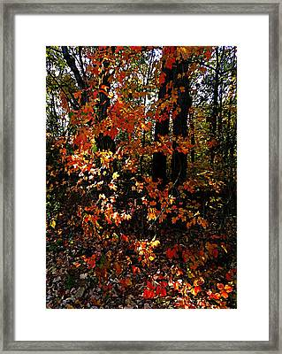 A Slash Of Sunlight Framed Print