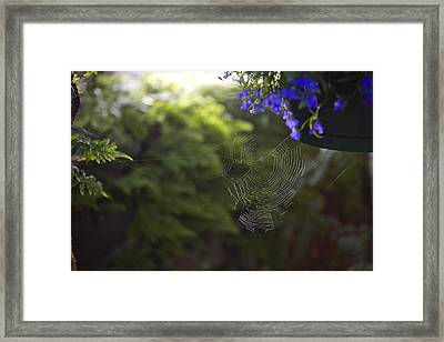 A Spider Web In A Garden Framed Print by Taylor S. Kennedy