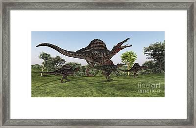 A Spinosaurus Mother Walks Framed Print