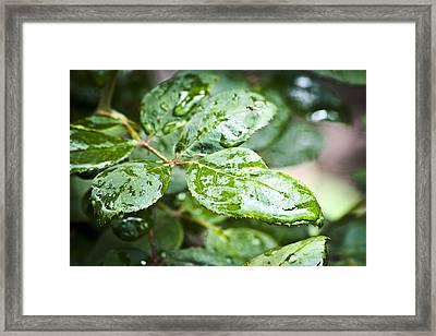 A Splash Of Green Framed Print by Steve Buckenberger