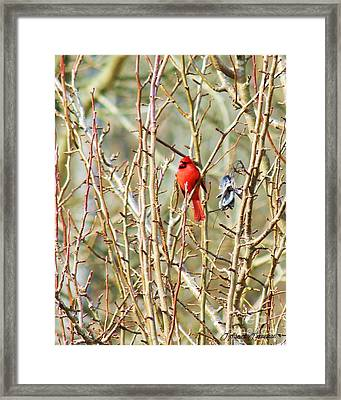 A Spot Of Red Framed Print by Lorraine Louwerse