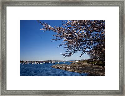 A Spring Day With Blossoms Covering Framed Print by Taylor S. Kennedy