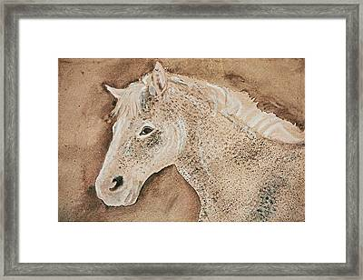 A Stallion Framed Print by Remy Francis