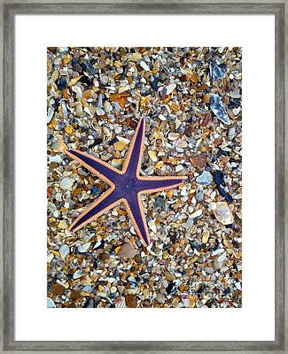 A Star Among Us Framed Print