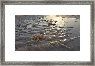 A Star Is Found Framed Print by Betsy Knapp