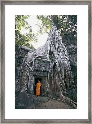 A Strangler Figs Gnarled Roots Creep Framed Print by Paul Chesley