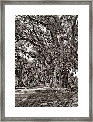 A Stroll Through Time Monochrome Framed Print by Steve Harrington