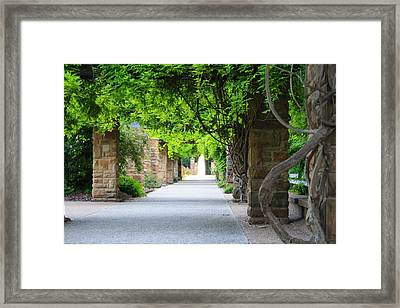 Framed Print featuring the photograph A Stroll Under The Vines by Lynnette Johns