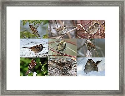 A Study In Sparrows Framed Print