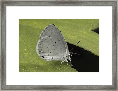 A Summer Azure Lights On A Leaf Framed Print by George Grall