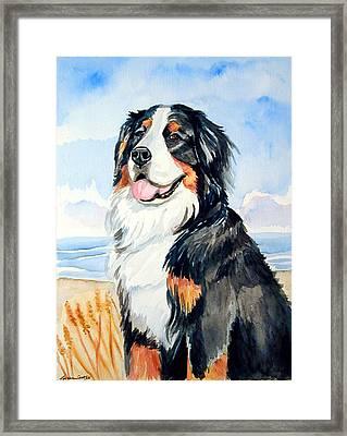 A Summer Day - Bernese Mountain Dog Framed Print