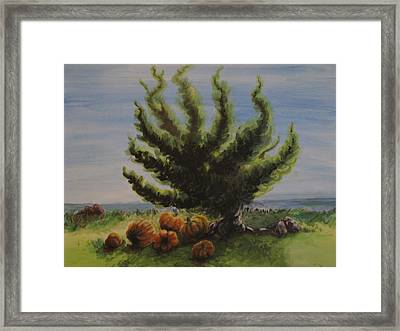 A Sunny Day At The Bay Of Pumpkins Framed Print
