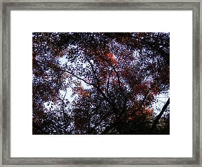 Framed Print featuring the photograph A Sunny Day by Bogdan Floridana Oana