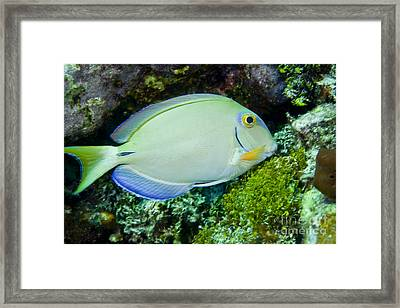 A Tang Fish Eating Plant Growth Framed Print by Terry Moore