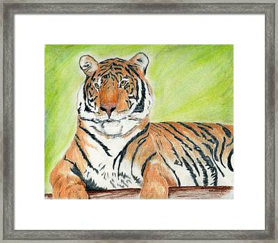 A Tiger's Rest Framed Print