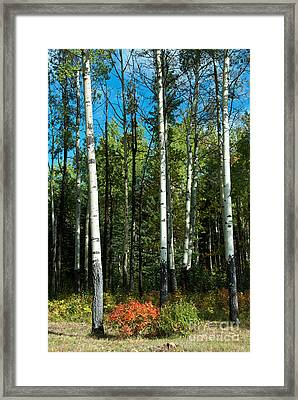 Framed Print featuring the photograph A Touch Of Autumn by Bob and Nancy Kendrick
