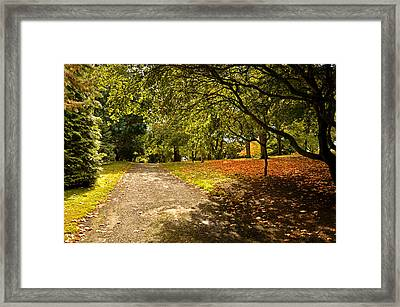 A Touch Of Autumn Framed Print by Martina Fagan