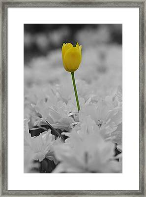 Framed Print featuring the photograph A Touch Of Color by Renee Hardison