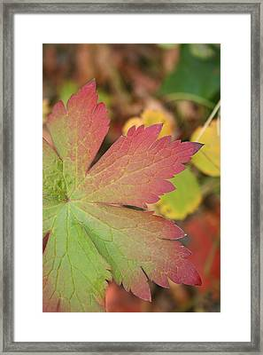 A Touch Of Fall Framed Print