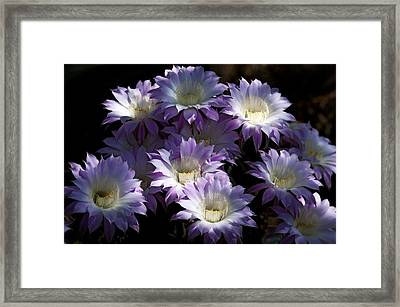 A Touch Of Lavender  Framed Print by Saija  Lehtonen