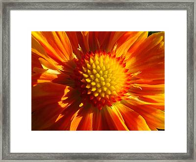 Framed Print featuring the photograph A Touch Of Sun In An Orcas Garden by Ronda Broatch
